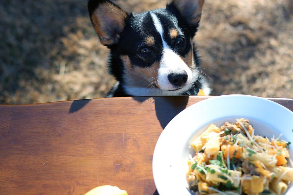 a dog looking at a bowl filled with a pasta and squash mixture